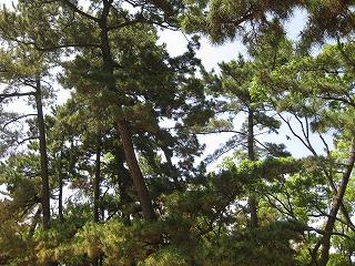 えびすの森
